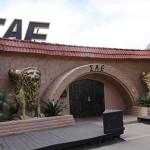 SAE pledge elimination raises questions for Greek system