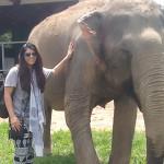Student volunteers with elephants
